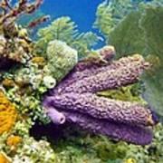 Purple Sponge Art Print