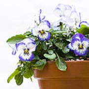 Purple Swirl Violas Art Print