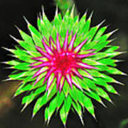 Purple Thistle Flower Art Print