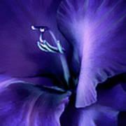 Purple Velvet Gladiolus Flower Art Print by Jennie Marie Schell