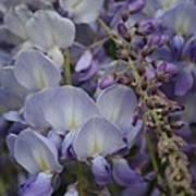 Purple Vine Art Print