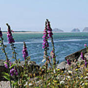 Purple Wildflowers At Netarts Bay Art Print