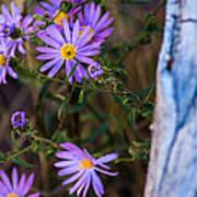 Purples And Blue Art Print