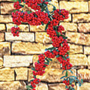 Pyracantha Berries On Stone Wall Art Print