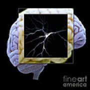 Pyramidal Neuron And Brain Art Print