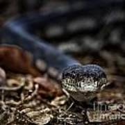 Python Art Print