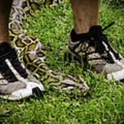 Python Snake In The Grass And Running Shoes Art Print
