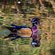 Quack Art Print
