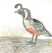 Quail Bird Art Print