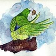 Quaker Parakeet Bird Portrait   Art Print