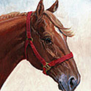 Quarter Horse Print by Randy Follis