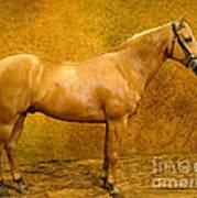 Quarter Horse Art Print
