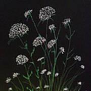 Queen Anns Lace Art Print