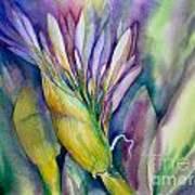 Queen Emma's Lily Blossom Art Print