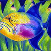 Queen Triggerfish Art Print