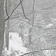 Querida In The Snow Storm Art Print