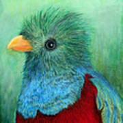 Quetzal Eye'n You Art Print