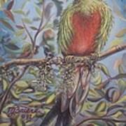 Quetzal On A Limb Art Print