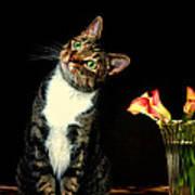 Quizzical Cat Art Print