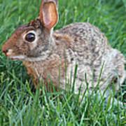 Rabbit On The Run Art Print