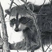 Raccoon - Charcoal Experiment Art Print