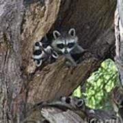 Raccoon Family Time Art Print