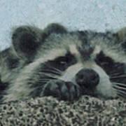 Raccoons Painterly Art Print