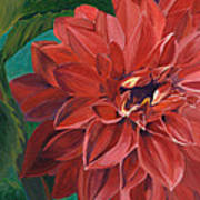 Rachael's Dahlia Art Print