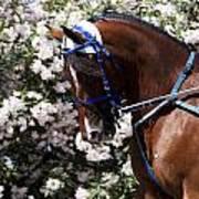 Racing Horse  Art Print