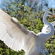 Radiant Great Egret Art Print