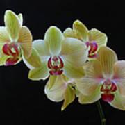 Radiant Orchid Art Print