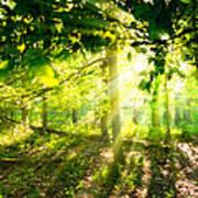 Radiant Sunlight Through The Trees Art Print