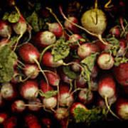 Flemish Radish Art Art Print