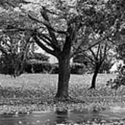 Rain And Leaf Ave In Black And White Art Print