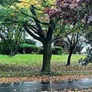 Rain And Leaf Ave Art Print