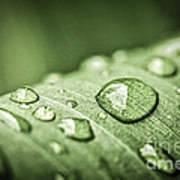 Rain Drops On Green Leaf Art Print by Elena Elisseeva
