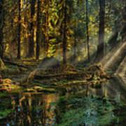 Rain Forest Sunbeams Art Print