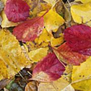 Rain Leaves Art Print