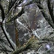 Rain On Pine Needles Art Print