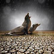 Rain Relief Art Print