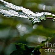 Rain Sparkles Art Print