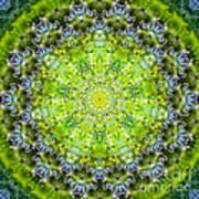 Lluvia Mandala Art Print