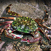 Rainbow Crab Art Print