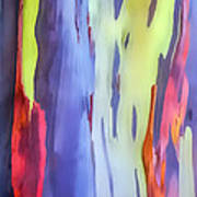 Rainbow Eucalyptus 2 Art Print