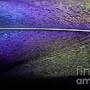 Rainbow Feather Art Print