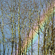 Rainbow Hiding Behind The Trees Art Print