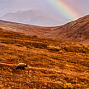 Rainbow Over Grizzly In Denali Art Print