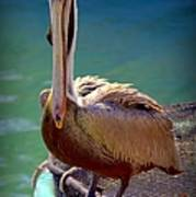Rainbow Pelican Art Print by Karen Wiles