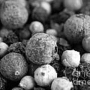 Rainbow Peppercorn Macro Black And White Art Print