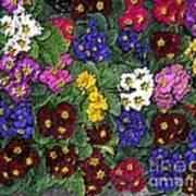 Rainbow Petals Art Print